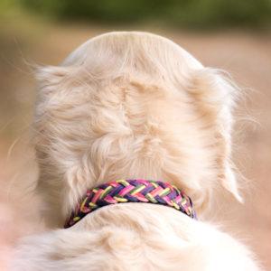 Collier H'Dog